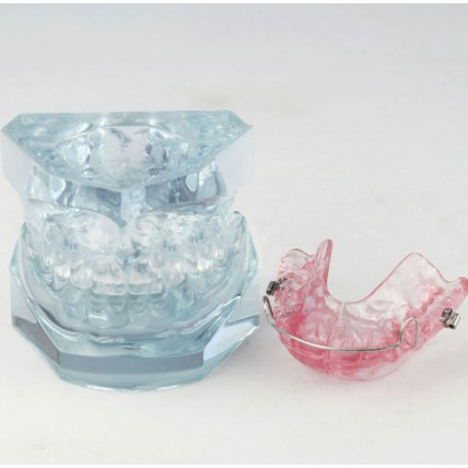 Dental Orthodontic Demonstration Model For Maintenance M3006