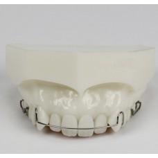 Dental Orthodontic Demonstration Model for Maintenance M3007