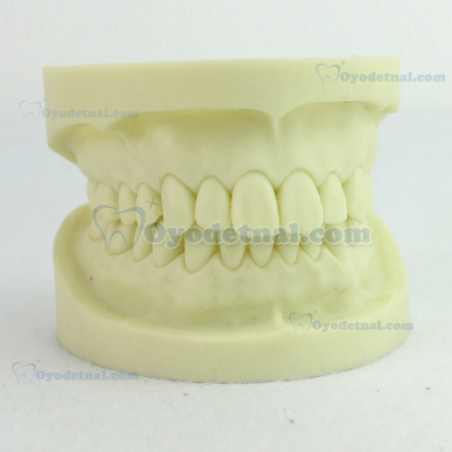 ENOVO Dental Study Model for Cavity Preparation Exercises Operational